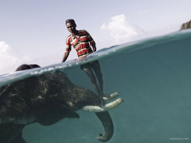24-elephant-underwater-photography.preview