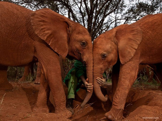 25-orphan-elephants-photography.preview