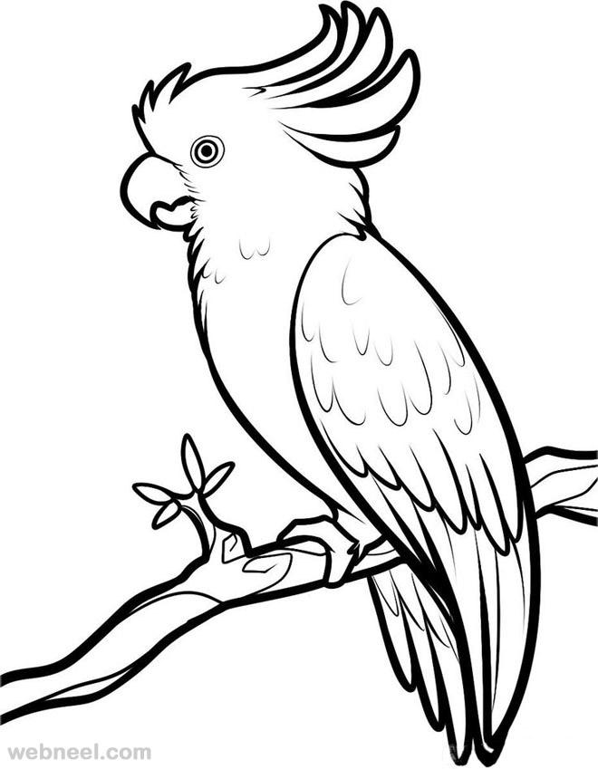 29-bird-drawings