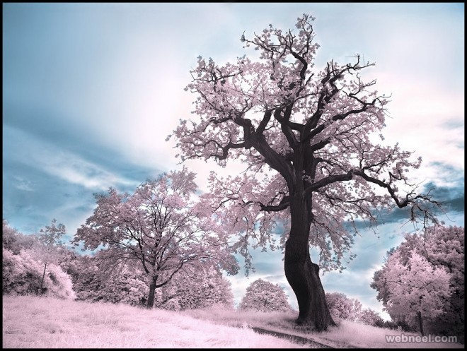 33-infrared-photography-by-michilauke.preview