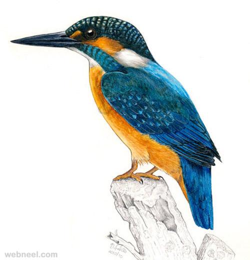 6-bird-drawings
