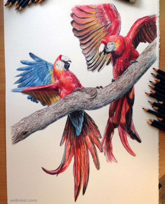 8-bird-drawings-realistic.preview