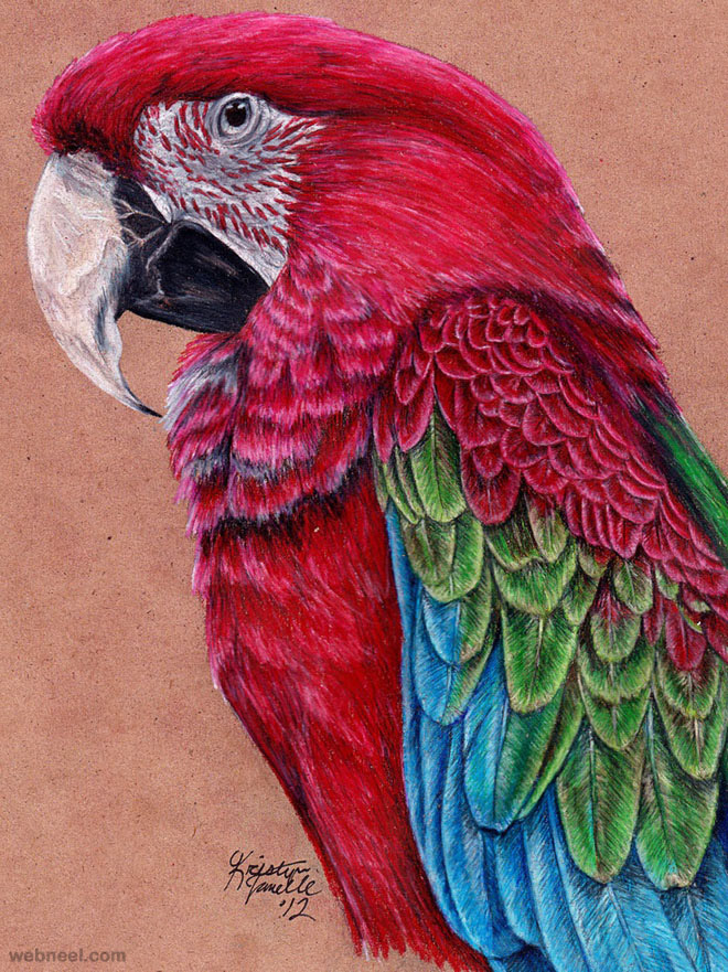 9-best-bird-drawings
