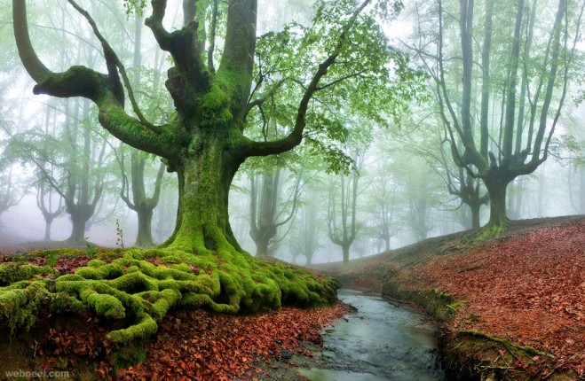12-nature-photography-tree-pixelecta.preview