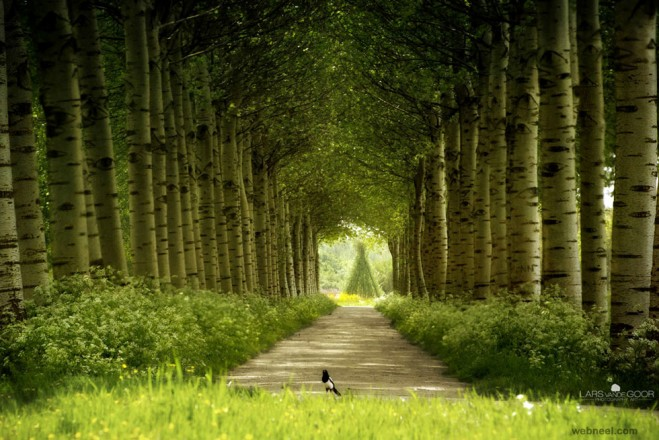 16-nature-photography-forest-by-larsvandegoor.preview
