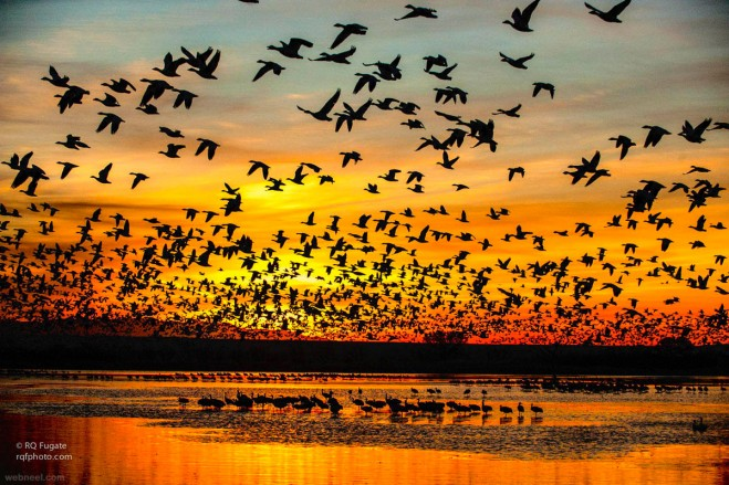 24-nature-photography-sunrise-by-bobfugate.preview