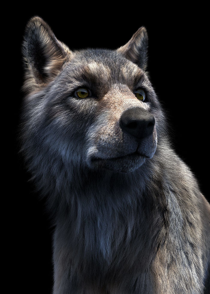 Portrait of a wolf by Felix Benjamin Bader